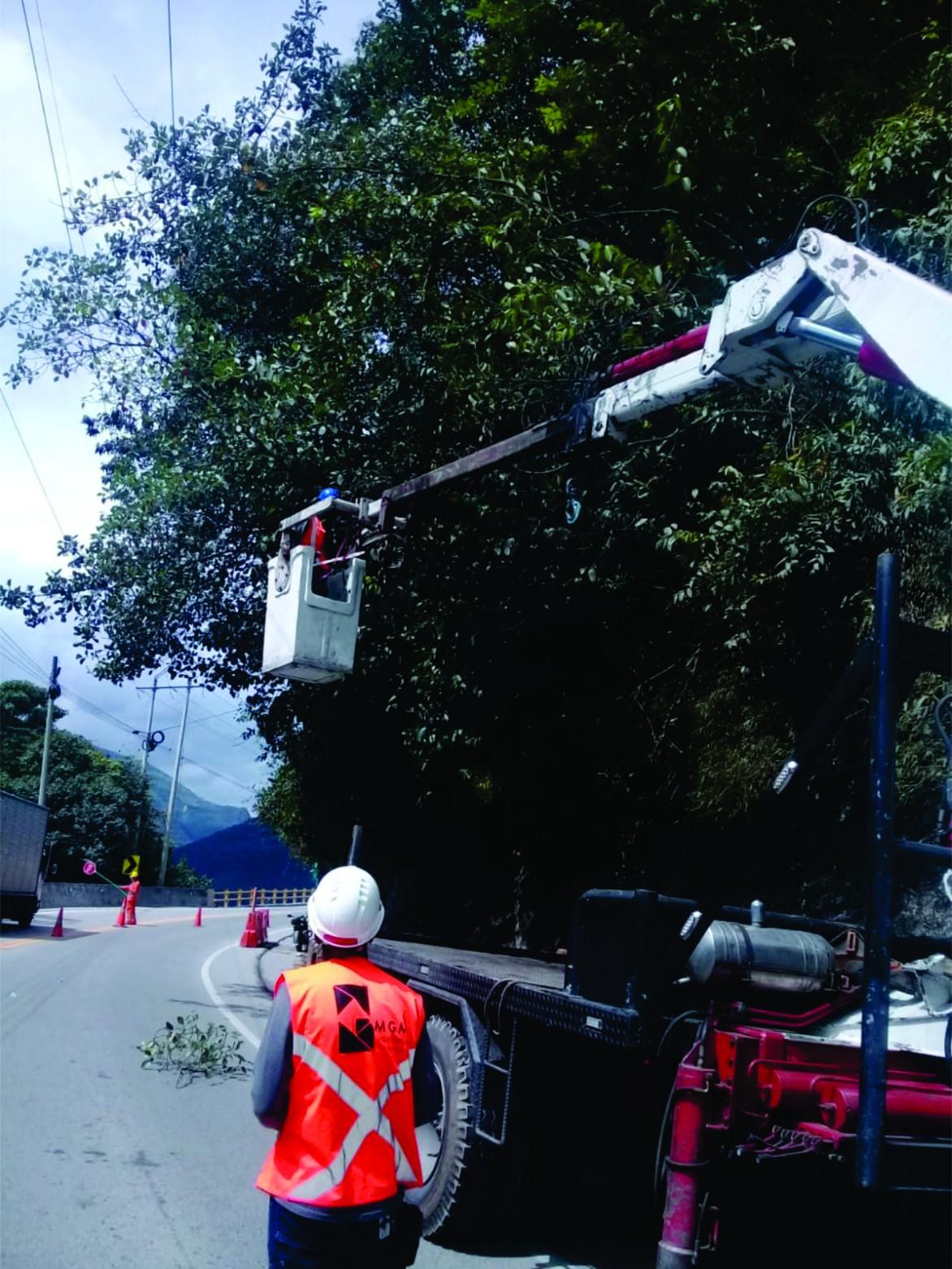 servicio de forestacion